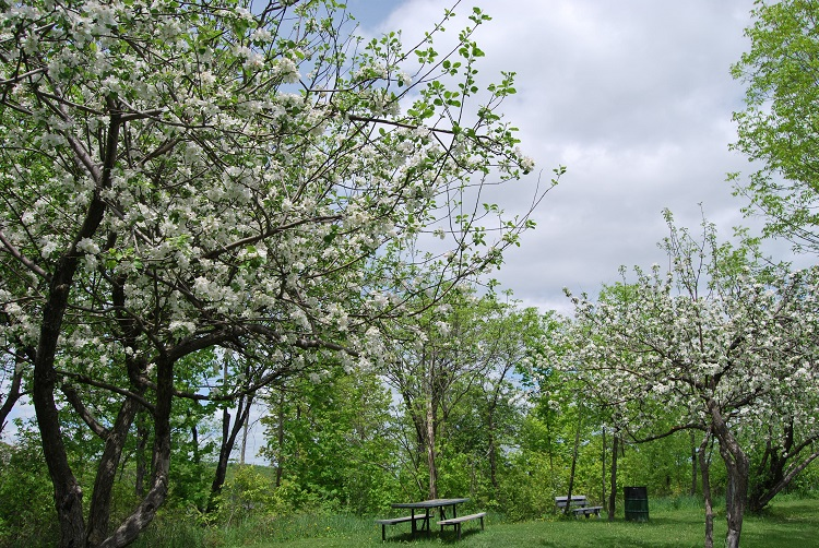 Springtime doesn't get any prettier than at Huntsville's historical Orchard Park (Town of Huntsville)