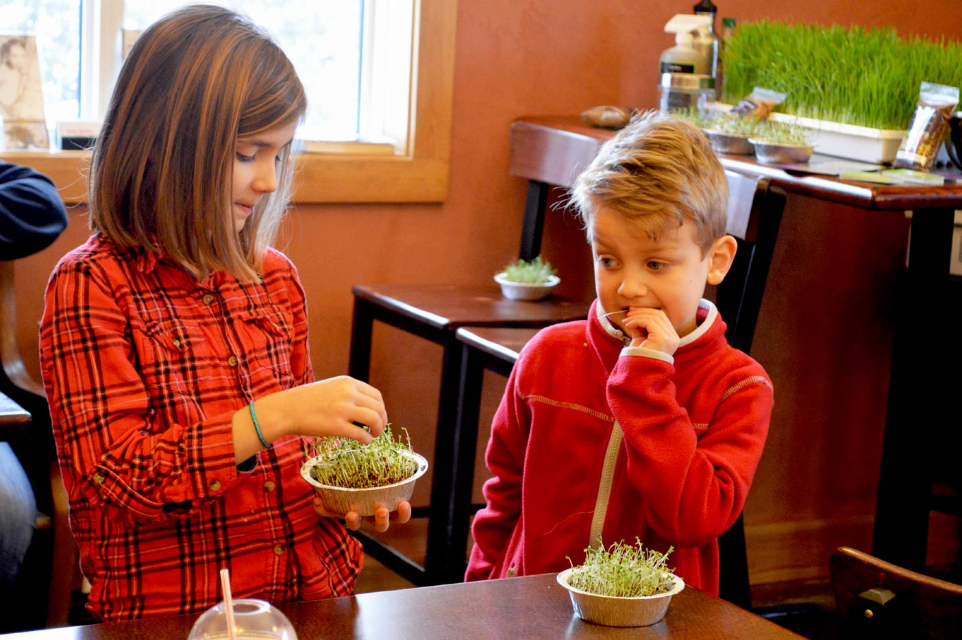 Seth's two children Gabriella and Sabastien munch on some sprouts their dad grew. Seth held a mini workshop on growing microgreens and those who attended were blown away at the simplicity of it.
