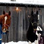 Sue Dixon (left) with Reba and Delena Jennings with Mojo at Sugar Foot Farm near Utterson