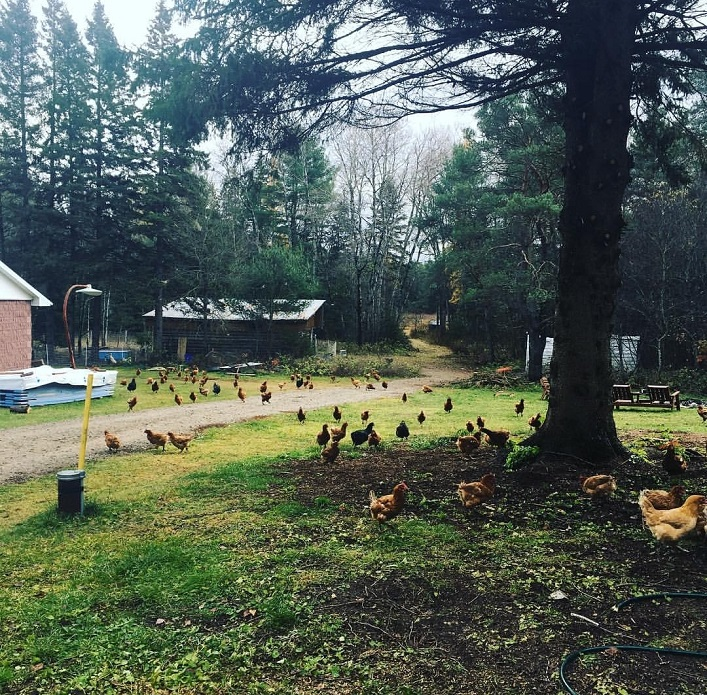 The Gamble Farm's hens free-range in warmer months (Instagram @thegamblefarm)