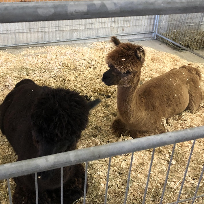 The Stoneleigh Farms petting zoo showcased a variety of animals
