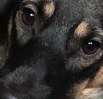 Michelle Ainsworth's dog, Sookie, died earlier this year after being hit by a car (Michelle Ainsworth)