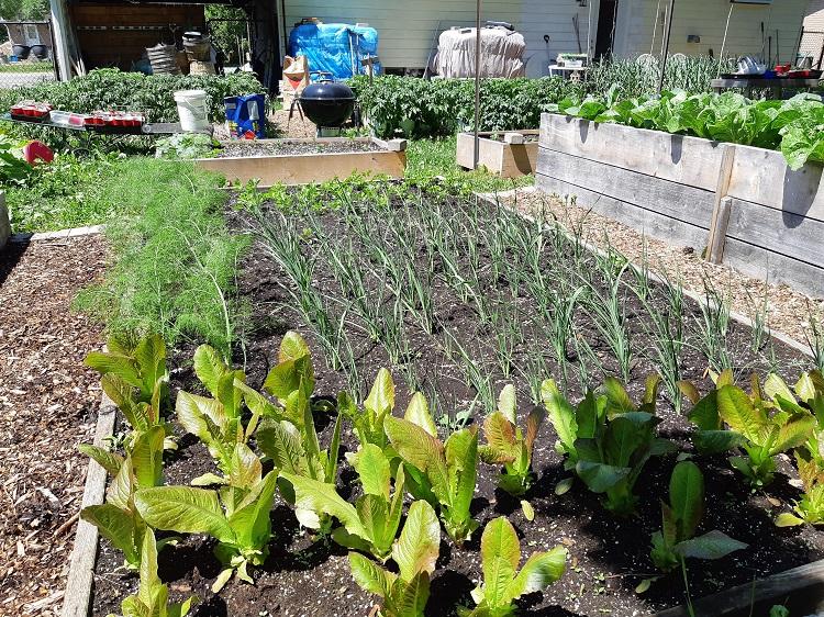Christina Yankovich's garden.